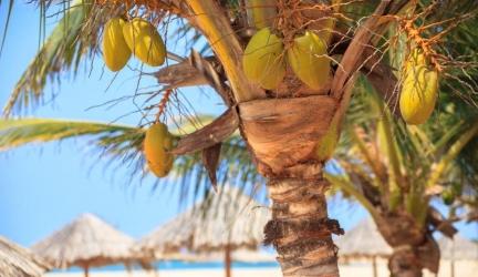Kaapverdië 5* resort & spa